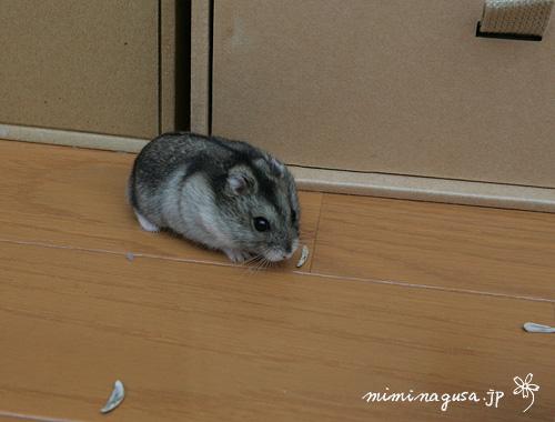 mitsuba_20060315.jpg