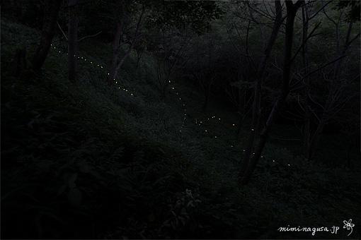 bl-20060604_hotaru_aya.jpg