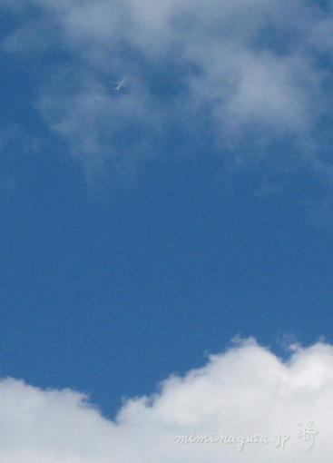 bl-20070615b.jpg