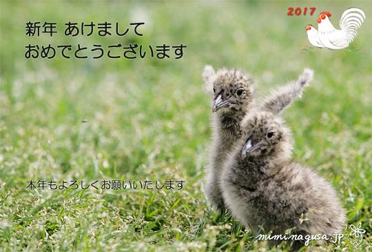 年賀2017_miminagusa.jp